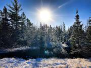 27th Dec 2020 - Winter walk