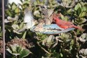 28th Dec 2020 - Four Calling Birds......