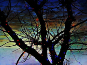 28th Dec 2020 - Winter Tree