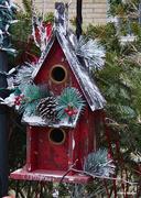 28th Dec 2020 - Christmas for the birds