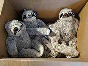 20th Dec 2020 - Box of sloths