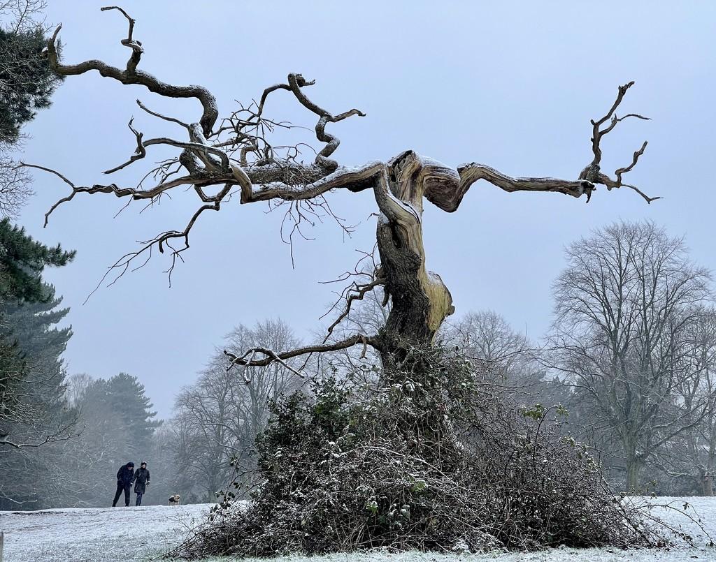 Wintery walk by tinley23