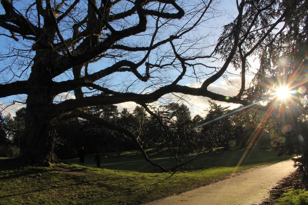 Kew sun flare by boxplayer