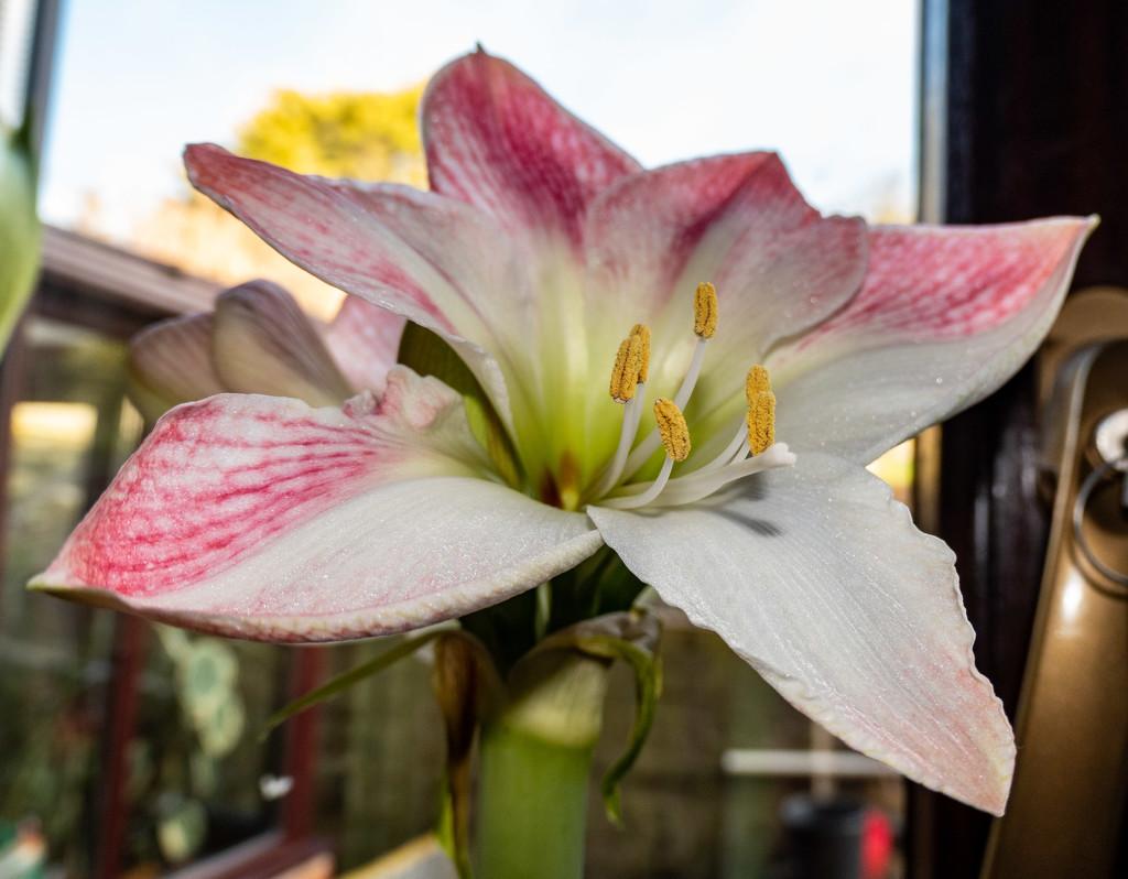 Winter bloom... by susie1205