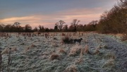 29th Dec 2020 - Another frosty scene on our morning walk