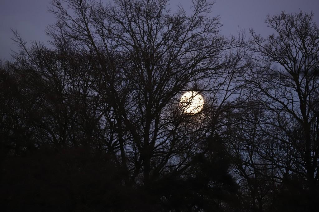 Moonlight by phil_sandford