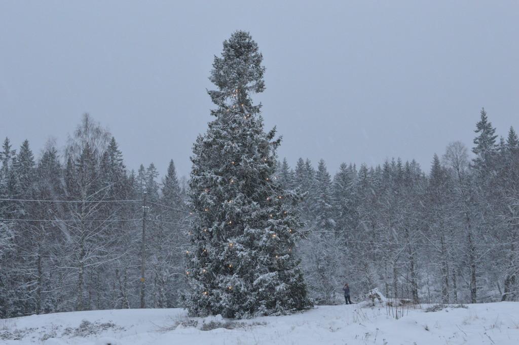 Let it snow by didi