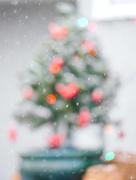 12th Dec 2020 - Little Outdoor Tree