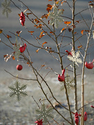 6th Dec 2020 - Little Red Cardinals