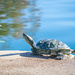 (Day 320) - Turtle Workout by cjphoto