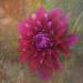 A flower  by gosia