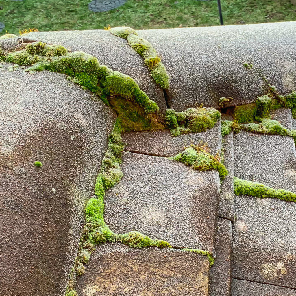 Frost, Tiles and Moss by pamknowler
