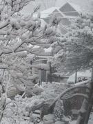 30th Dec 2020 - Snow scene