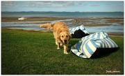 30th Dec 2020 - Meg at the beach..