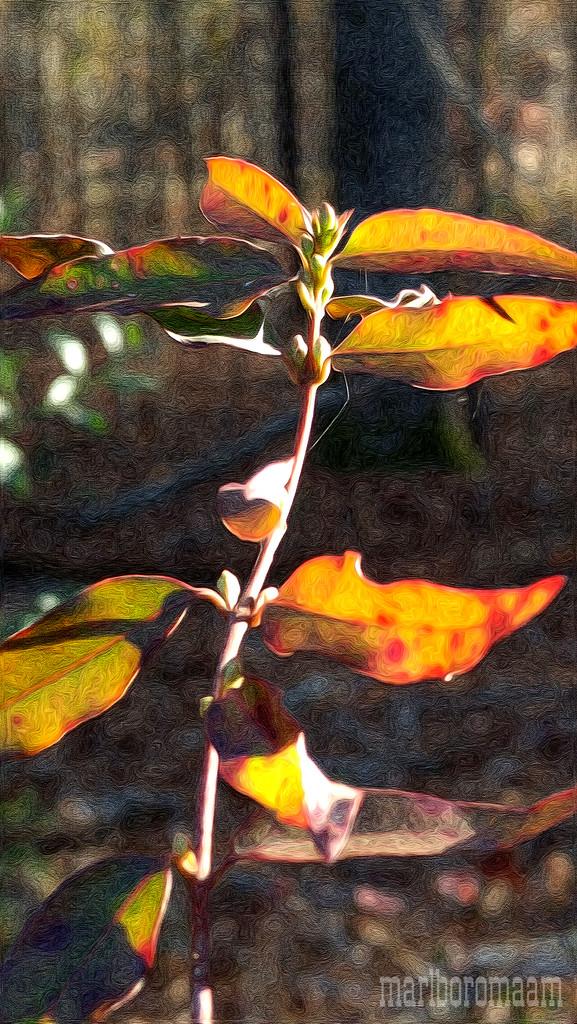 Painted wild jasmine vine... by marlboromaam