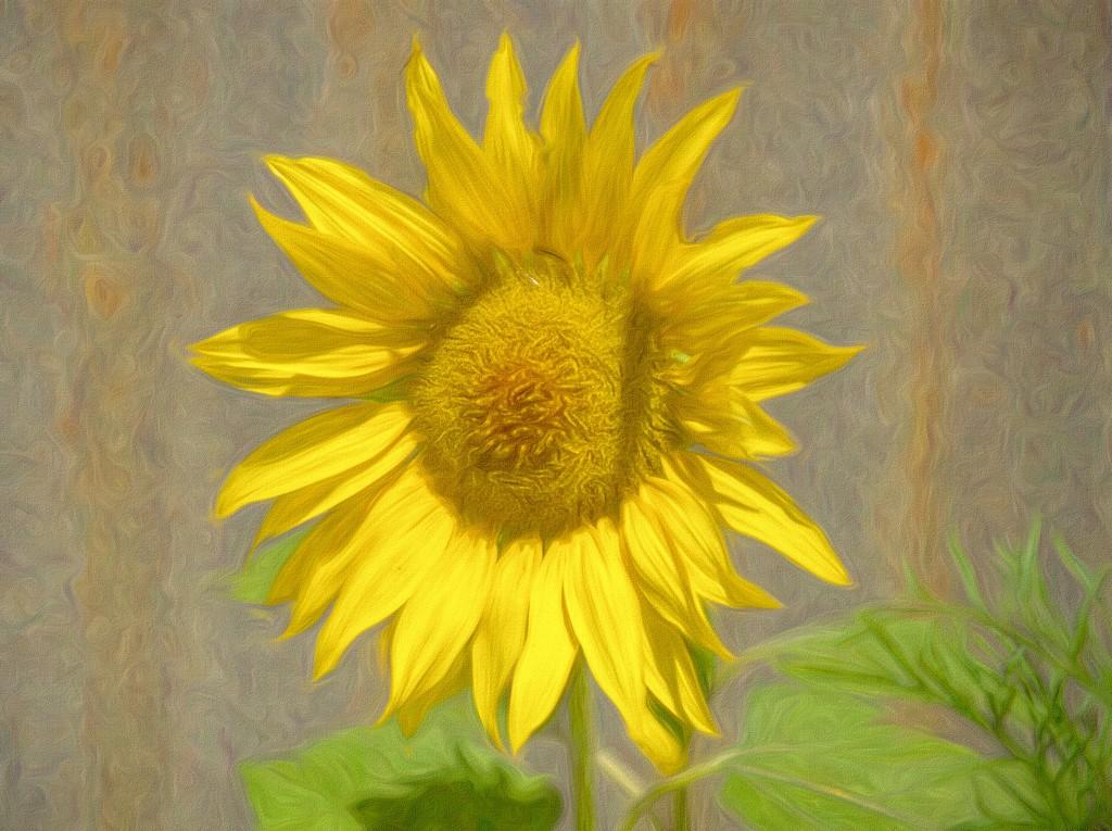 Tweaked Sunflower PC300964 by merrelyn