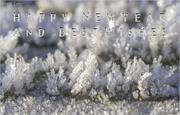 31st Dec 2020 - Frosty Start