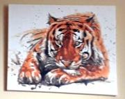 30th Dec 2020 - Amir Tiger