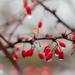 Frozen droplets by haskar