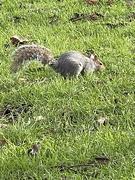 31st Dec 2020 - The Squirrels