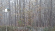 1st Jan 2021 - Morning fog...