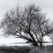 Solitary Tree by cdcook48