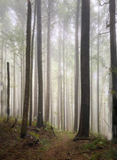 1st Jan 2021 - Foggy Forest