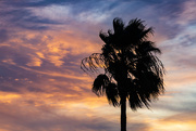 1st Jan 2021 - Palm Tree in the Sunset