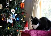 1st Jan 2021 - Kiki and tree