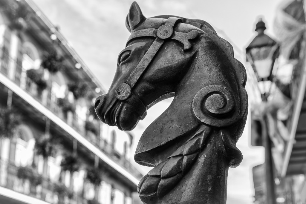Horse Hitch in New Orleans by jyokota