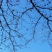 Bare water oak branches... by marlboromaam