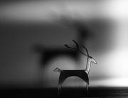 1st Jan 2021 - The Reindeer