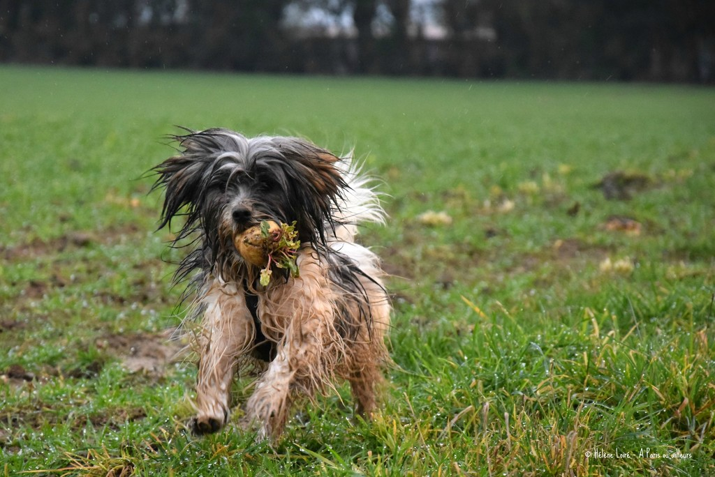 Just for fun: Romeo, also called the Mop by parisouailleurs