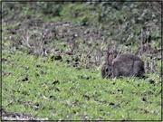 2nd Jan 2021 - Little bunny