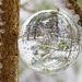 Look at winter ... through my crystal ball by fayefaye