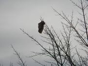 2nd Jan 2021 - Bag in Tree
