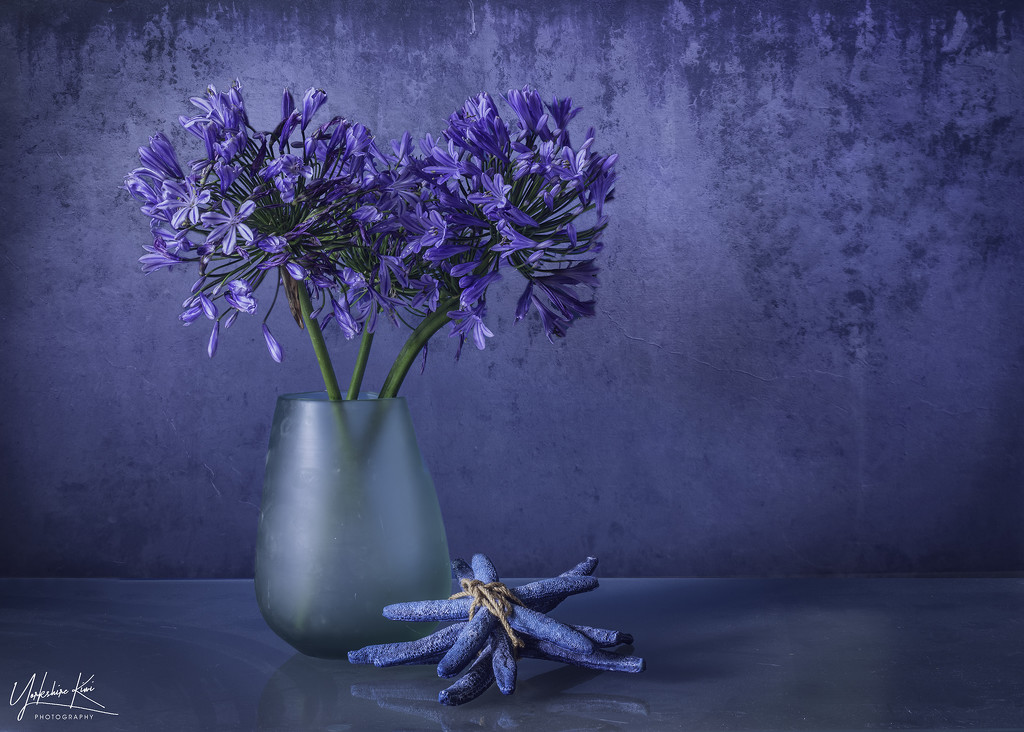 Blue Still Life by yorkshirekiwi