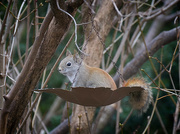 2nd Jan 2021 - Another Squirrel