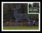 2nd Jan 2021 - Rudolph