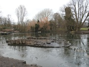 1st Jan 2021 - Winter at the Pond