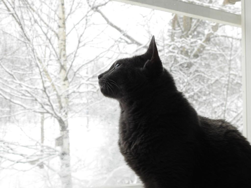 Winter by katriak