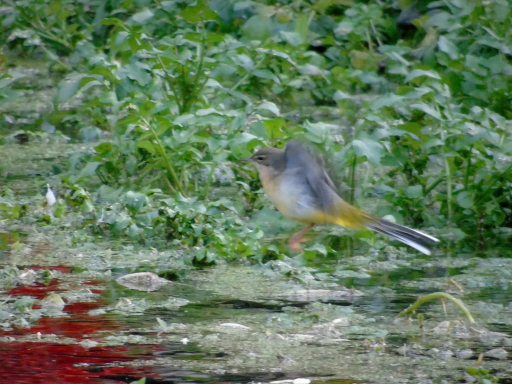 Yellow River Bird by bulldog
