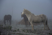 2nd Jan 2021 - Horses in the mist