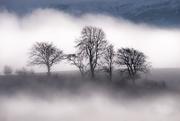 31st Dec 2020 - Misty trees