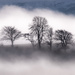 Misty trees by inthecloud5