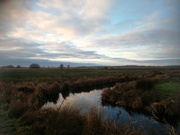 2nd Jan 2021 - Needed a good walk so off to the marshes I went