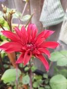 3rd Jan 2021 - blooming