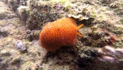 31st Dec 2020 - Nudibranch