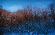 2nd Jan 2021 - Sunset in the backyard