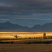 Sunrise over wheatfields by mv_wolfie